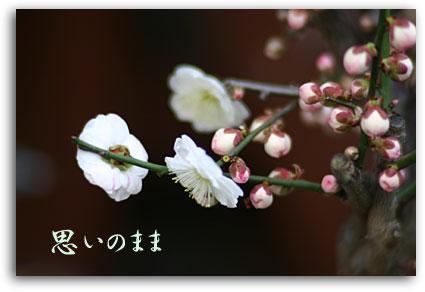 IMG_5352.jpg