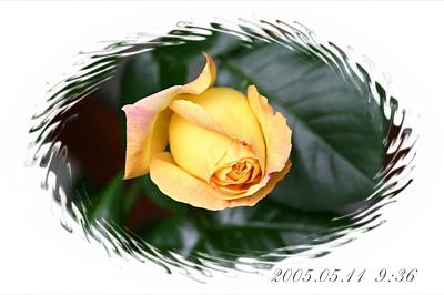 IMG_1497.jpg