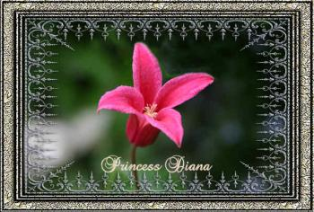 princess_dianas.jpg